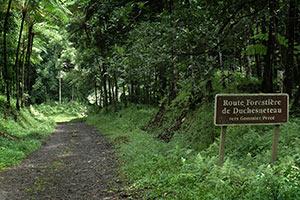 Martinique Caribbean Islands Green Tourism